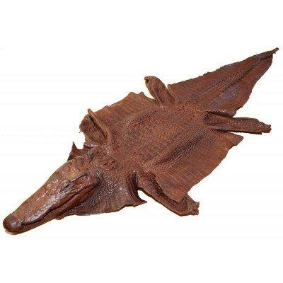 Шкура крокодила з головою і лапами коричнева Crocodile skin , фото