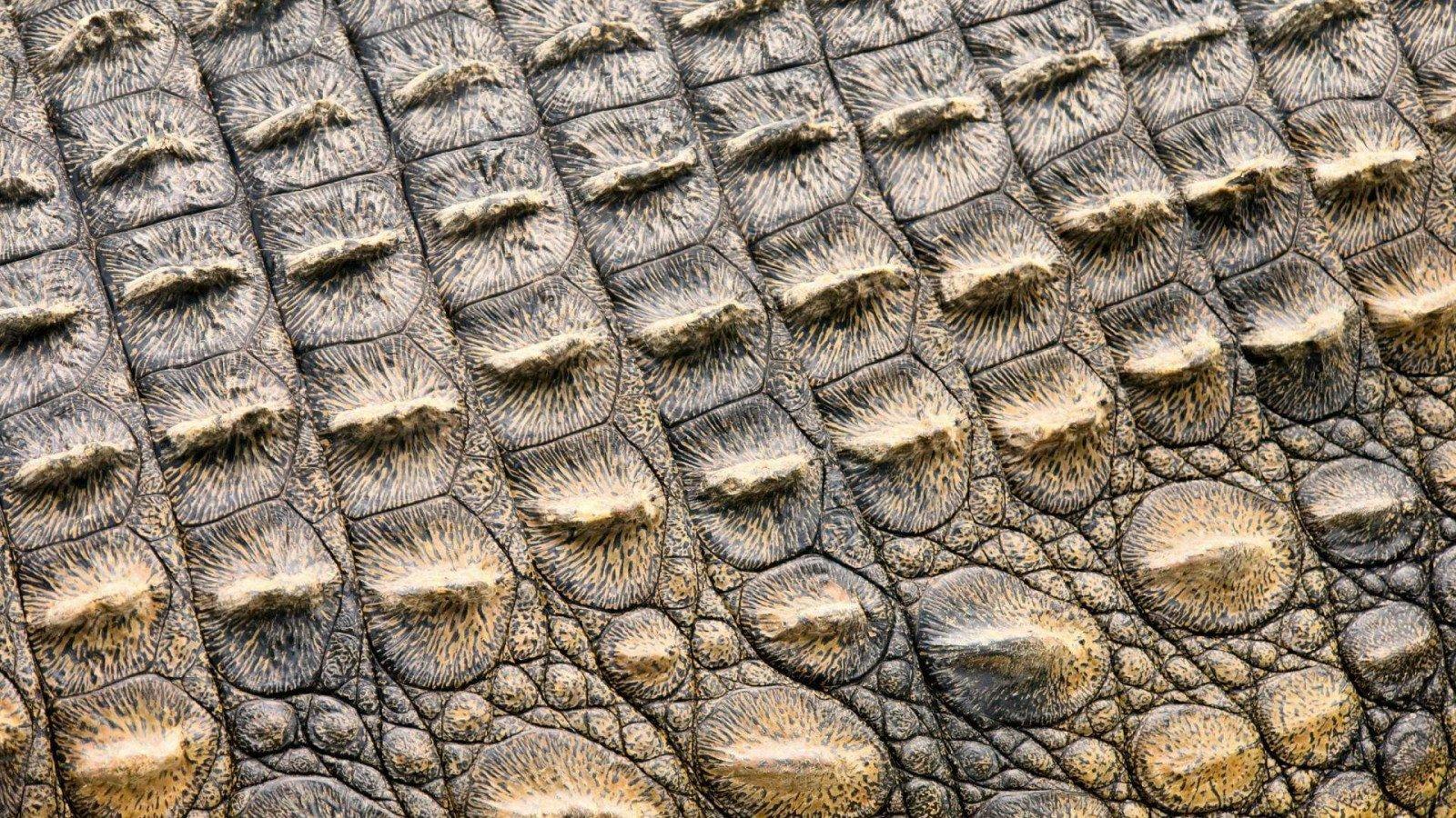 Вироби зі шкіри крокодила в Україні